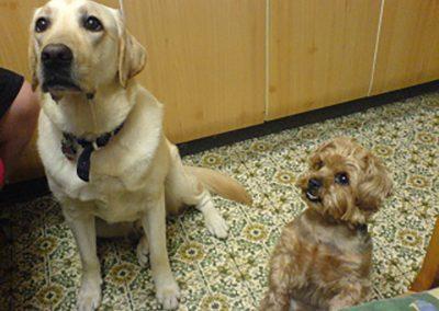 Lucky und Nellie